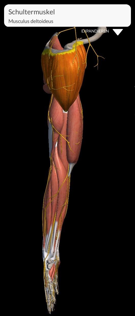 Schulterproblematik durch falsche Haltung im Alltag